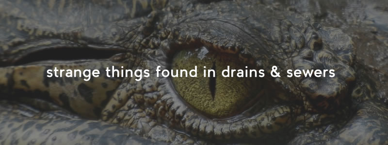 5 Strange Things Found in Drains